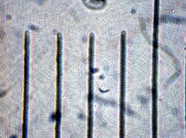 Mikroskop test vergleich u a testberichte